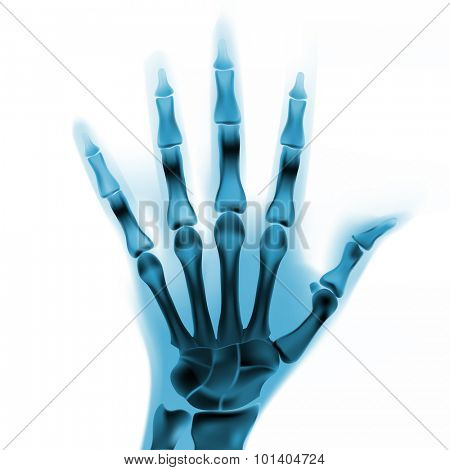 colorful vector x-ray hand