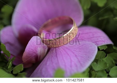 Wedding Rings And Orchid