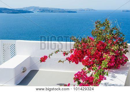 Terrace With Red Flowers. Santorini Island, Greece.