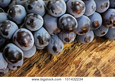 Fresh concord grapes side view