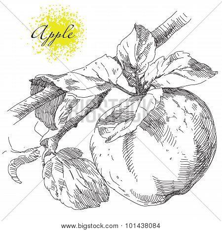 Hand drawing apple on apple tree branch
