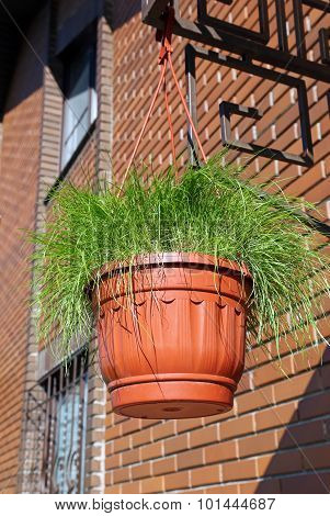 Pot With Grass