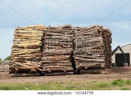 Logs Abound