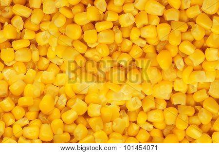 Yellow Corn Grain Background