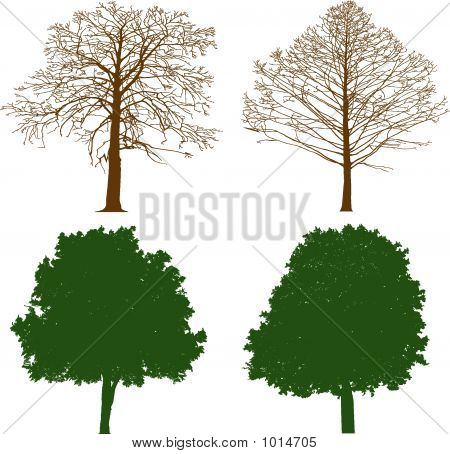 Trees - Illustration