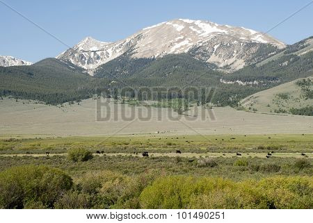 Lemhi Cattle Ranch