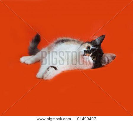 Tricolor Fluffy Kitten Lies On Orange