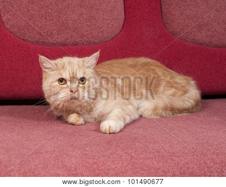 Red Tabby Cat Lying On Couch