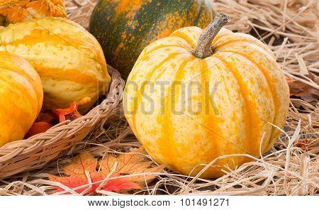 Autumn Squash Closeup