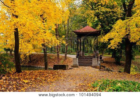 Autumn landscape in a park with gazebo. Cloudy day. Maples with yellow leaves