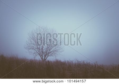 One tree. Landscape with mist on a cloudy day. Color toning. Low contrast
