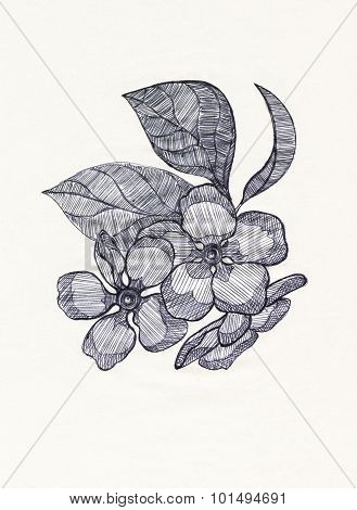 Spring flowers. Drawing with ballpen.