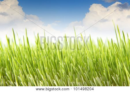 Wheat Field Against The Blue Sky