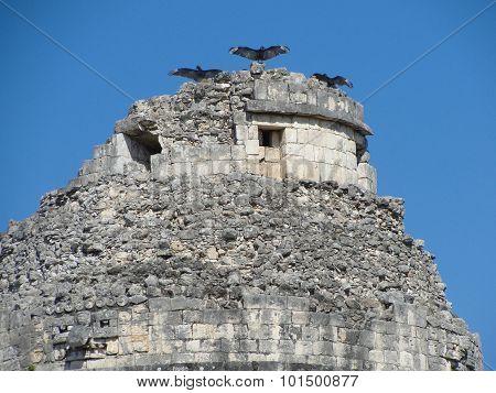 Vultures sunning  at Chickenitza