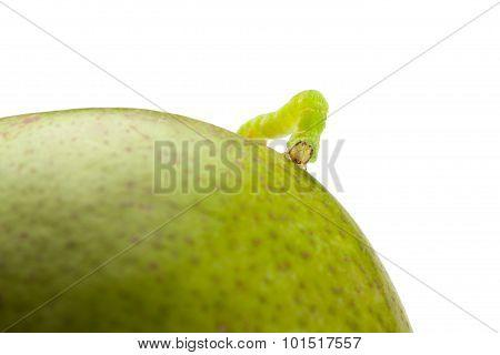 Codling Moth Caterpillar On Pear