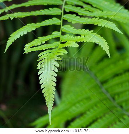 green fern leaf on de focused fores background