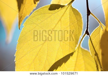 Autumn leaves against blue sky - fall season abstract background, macro shot
