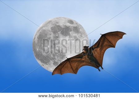 Bat Silhouettes With Full Moon - Halloween Festival