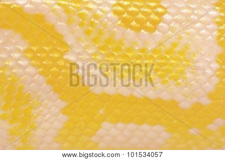 Scales Of A Golden Python