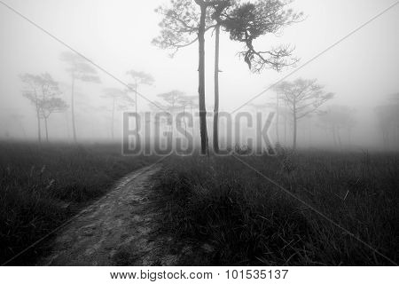 Tree In The Center Of Picture With Fog Background Black And White Image