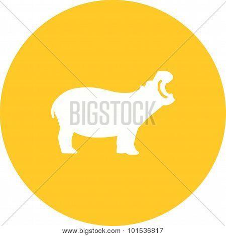 Hippo , Animal