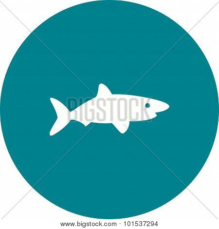 Shark , Fish