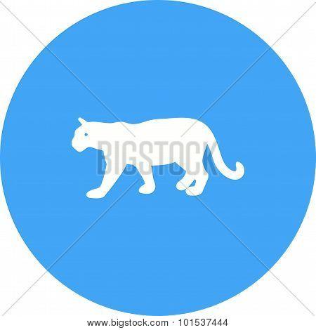 Tiger , Animal