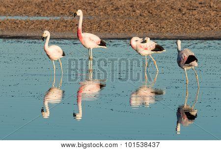 Flamingo reflections, Laguna Chaxa