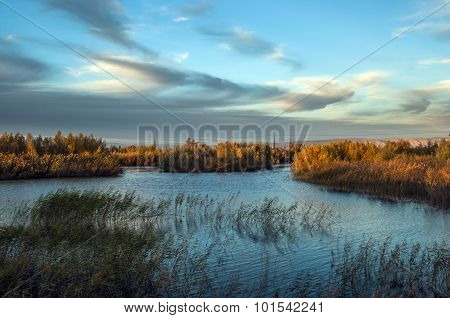 Wetland with reed