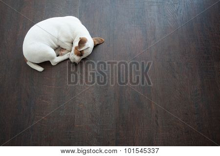 Puppy sleeping at warm floor. Dog