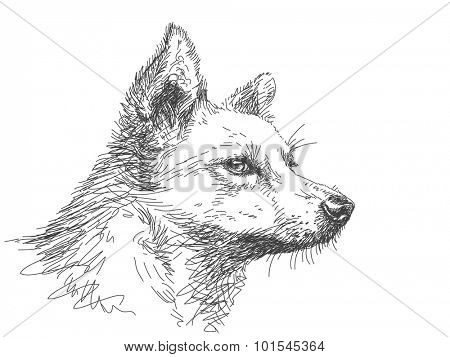 Sketch of dog muzzle, Hand drawn vector illustration