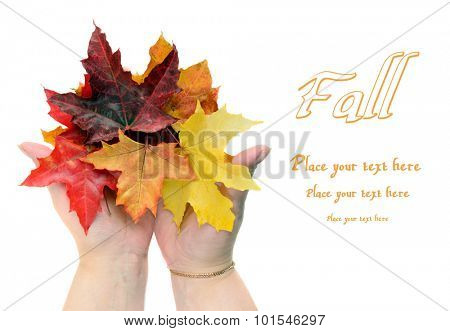 Fall leaves in women hands isolated on white