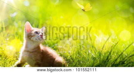 Art  Little Kitten  Hunting A Butterfly