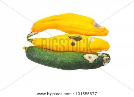 Molded vegetable marrow (zucchini)