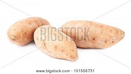Pile of sweet potato plants isolated