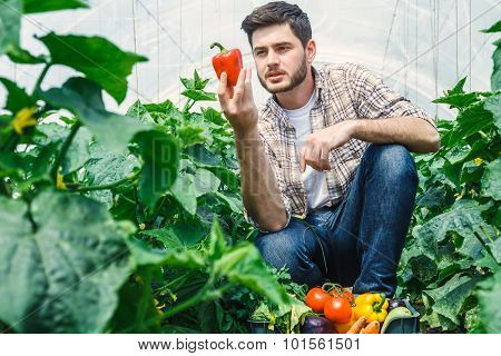 Agronomist holding vegetables in a greenhouse