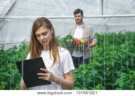 Farmers working in a greenhouse growing vegetables