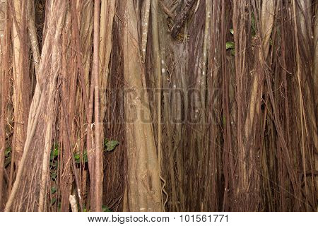 Dried Twigs And Branches Striped Wood Texture Pattern Background Wallpaper