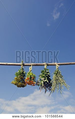 Mix Various Medical Herbs Hanged To Dry