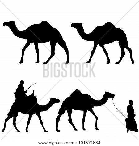 Silhouettes Of Camels With Camel Drovers