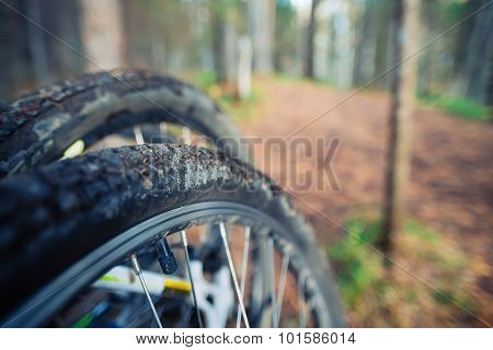 Bicycle wheel in forest dirt