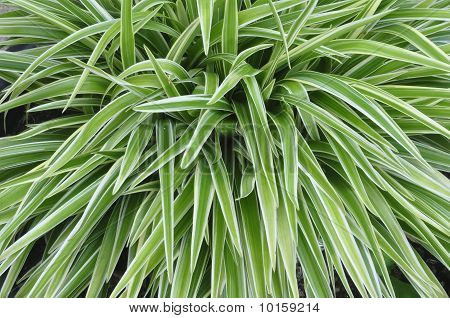 Nature Green Grass color