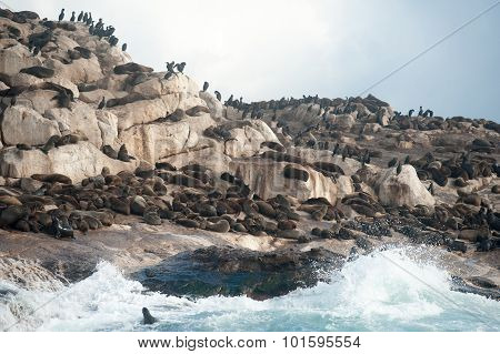 Seal Island In False Bay, South Africa