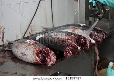Slicing a tuna in the fish shop