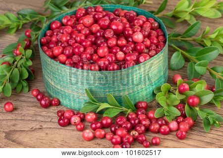 Lingonberries in green basket