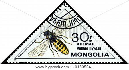 Vintage  Postage Stamp. Paravespula Germanica.