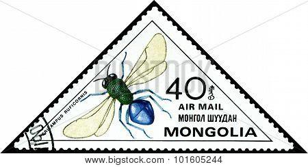 Vintage  Postage Stamp. Perilampus Ruficornis.