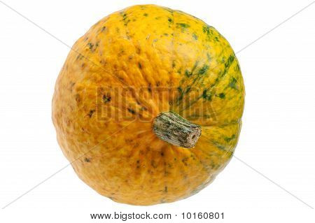 Colourful Pumpkin Isolated On White Background.
