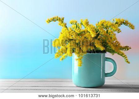 Beautiful mimosa flowers on light blue background