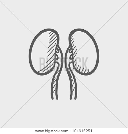 Kidney sketch icon for web, mobile and infographics. Hand drawn vector dark grey icon isolated on light grey background.